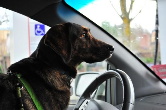 Zelda hat uns sicher zum Parkplatz gebracht