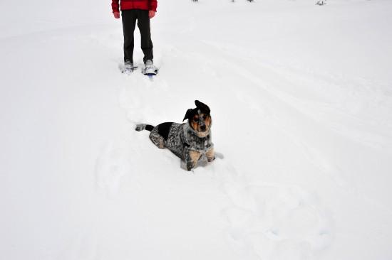 Schneehund 3