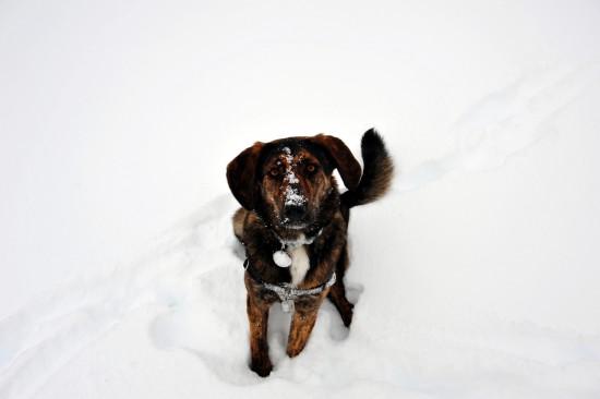 Schneehund 2