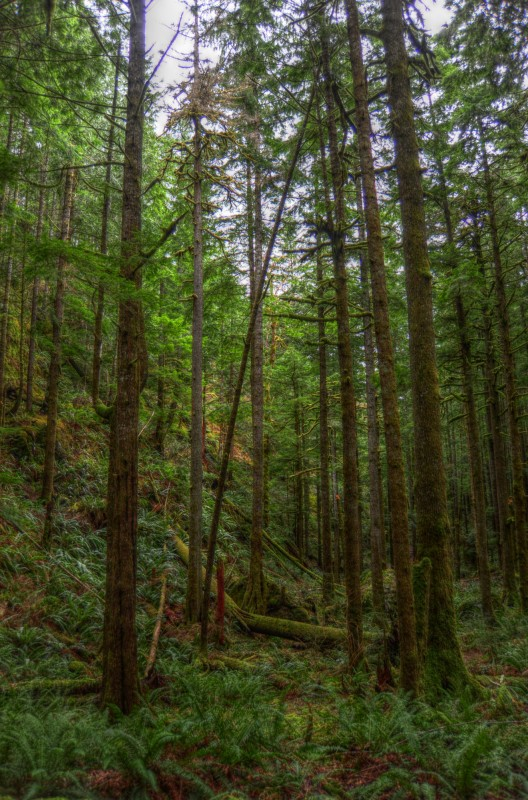 """Aufstieg durch den Märchenwald mit """"Furry Trees"""""""