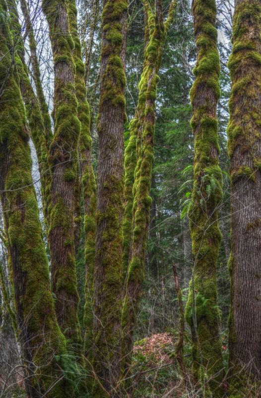 Nochmehr Bäume mit Fell