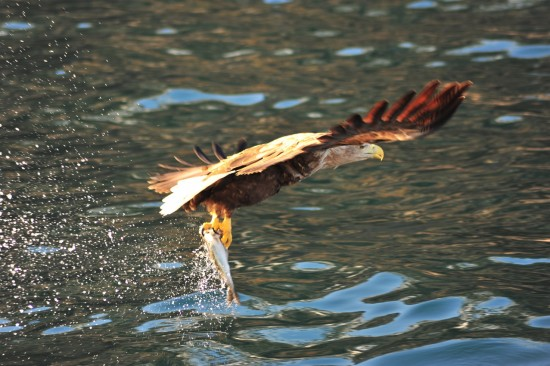 First picture from the sea eagle safari
